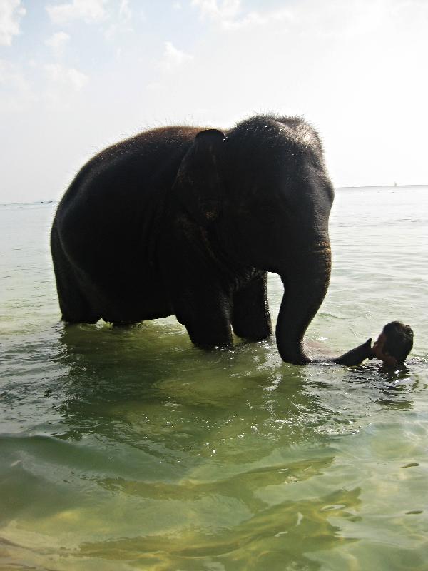 Baby elephant, Klong Muang beach