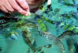 Feeding fish at Hong Beach