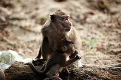 Monkeys beach