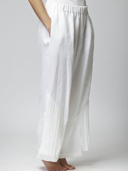 ARISAEMA WHITE