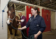 veterinarians-739365_640.jpg