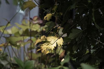 садовая фотосъемка