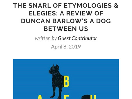 Entropy reviews A DOG BETWEEN US
