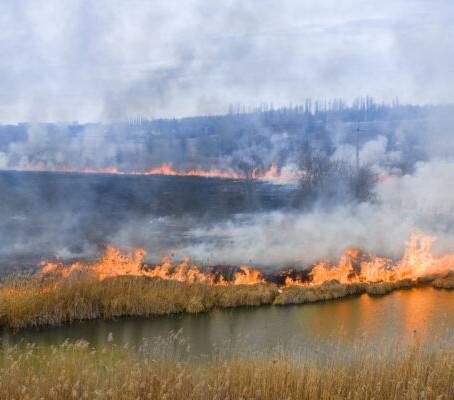 Problema arzatoare: incendiile de vegetatie in contextul schimbarilor climatice