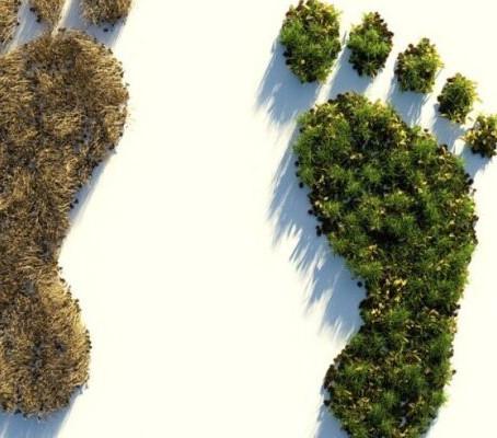 9 pasi catre o amprenta ecologica mai mica