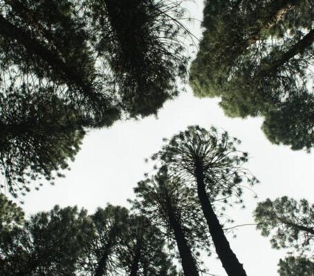 10 reguli pentru a planta copaci – cum re-impadurim fara a dauna
