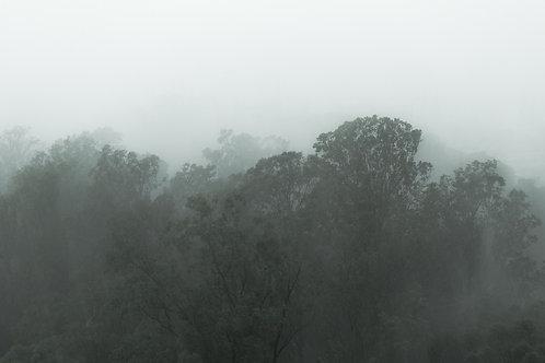 Trees Under The Rain