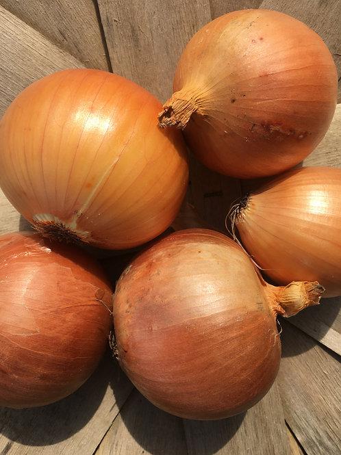 1 lb Onions