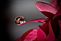 planta-con-rocío-representado-llanto-emo