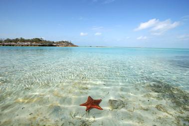 Sea Stars in the Bahamas