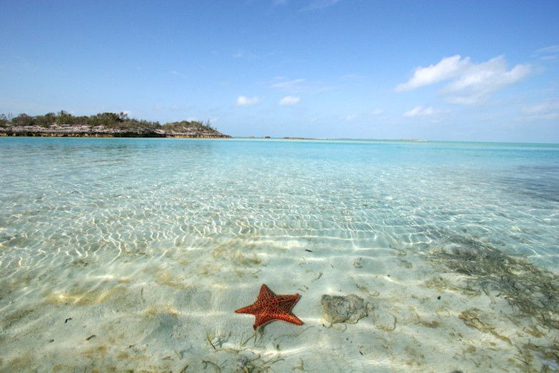 Sea Stars in the Bahamas