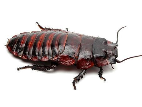 Cockroach Care