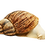 Thumbnail: Albino Reticulata Land Snail (Achatina reticulata)