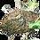 Thumbnail: Weaver Ants (Polyrhachis dives)