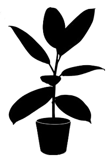 black-silhouette-tropical-plant-pot-isol