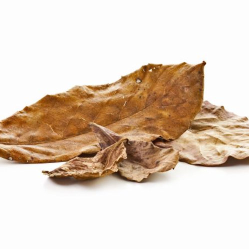 Indian Almond Leaves (pack of 5)