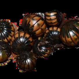 Brown Pill Bug Millipedes (Glomeridae sp.)