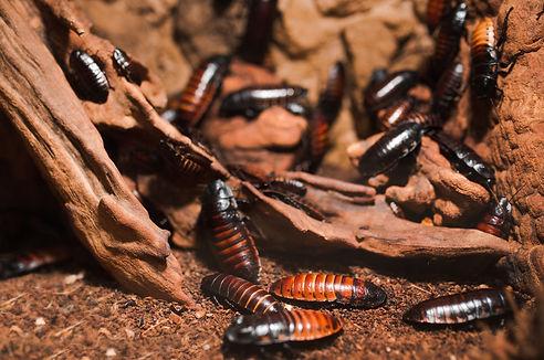 Macro Creepy close up of A lot of Madaga
