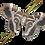 Thumbnail: Indian Eri Silkmoth Caterpillars (Samia cynthia ricini)