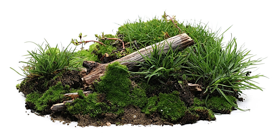 Green moss on soil, dirt pile with tree