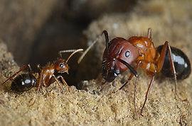 60101O_Ants_1280.jpg