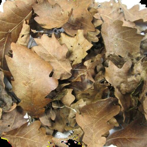 Dried Oak Leaves (1 Litre)