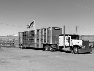 Stephens Cattle Truck with Flag.JPG