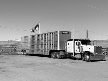 Stephens Cattle Truck with Flag.JPG
