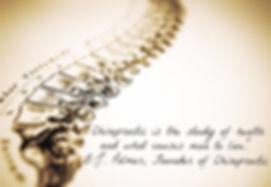spine (2)_edited.jpg