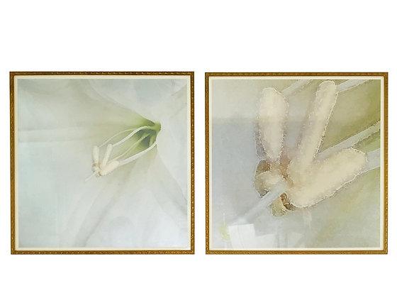 #3341 Pair of Light Blue Floral Prints