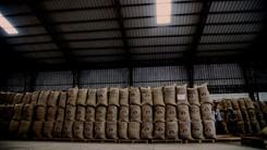 GRAND SOUTH - Creemos en el Cacao