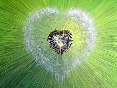 Heart Chakra Meditation II :: 23 Junho
