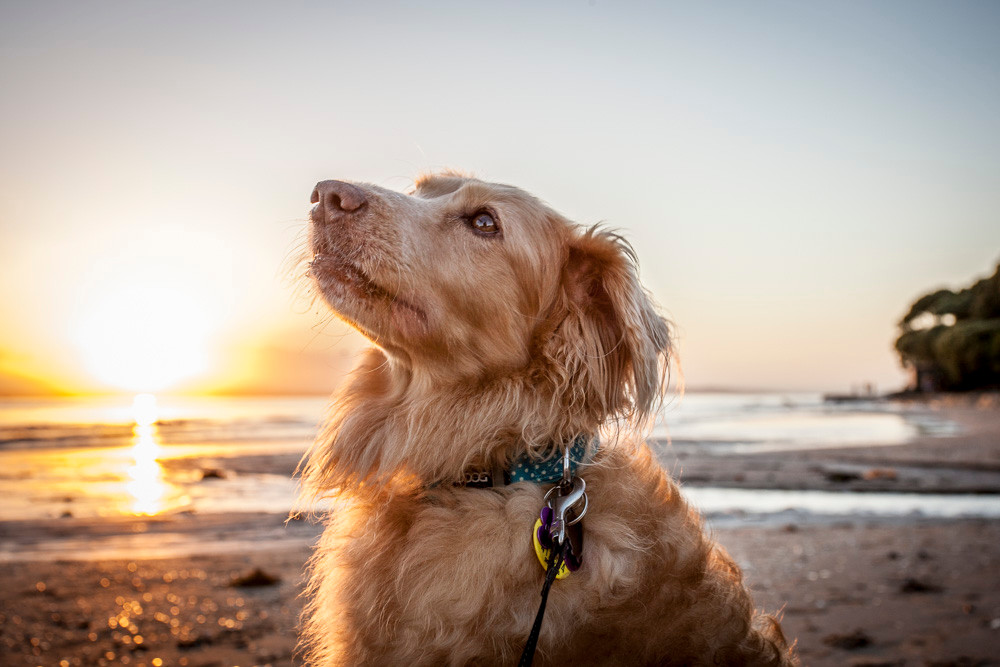 We are so spoiled in Auckland. There is a fabulous beach within easy reach of most people. And even better if you have a gorgeous dog to accompany you! This is Eva.