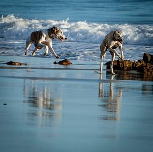 Lifestyle photography - Animals