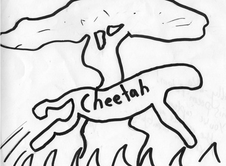 'Cheetah' A poem by Adam (year 5)