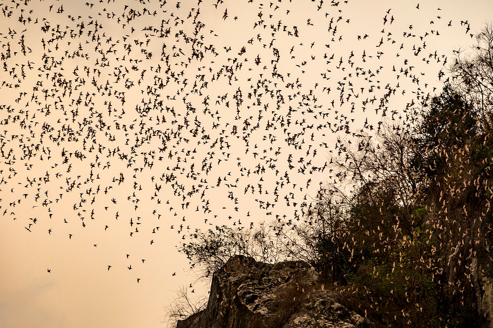 The Phnom Sampov Bat caves, where a huge colony of bats stream from at dusk every day
