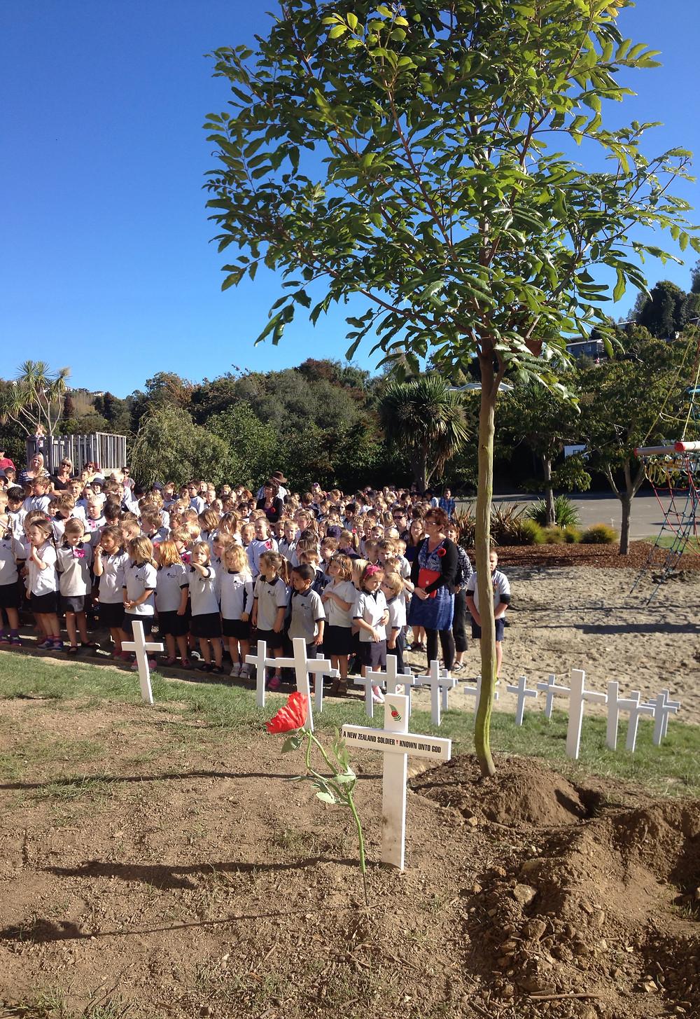 The ANZAC tree.jpg