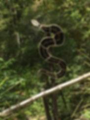Indigenous Art - Snake