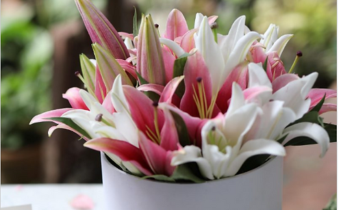 Yours Lilly