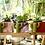 Thumbnail: Small Cactus Planter
