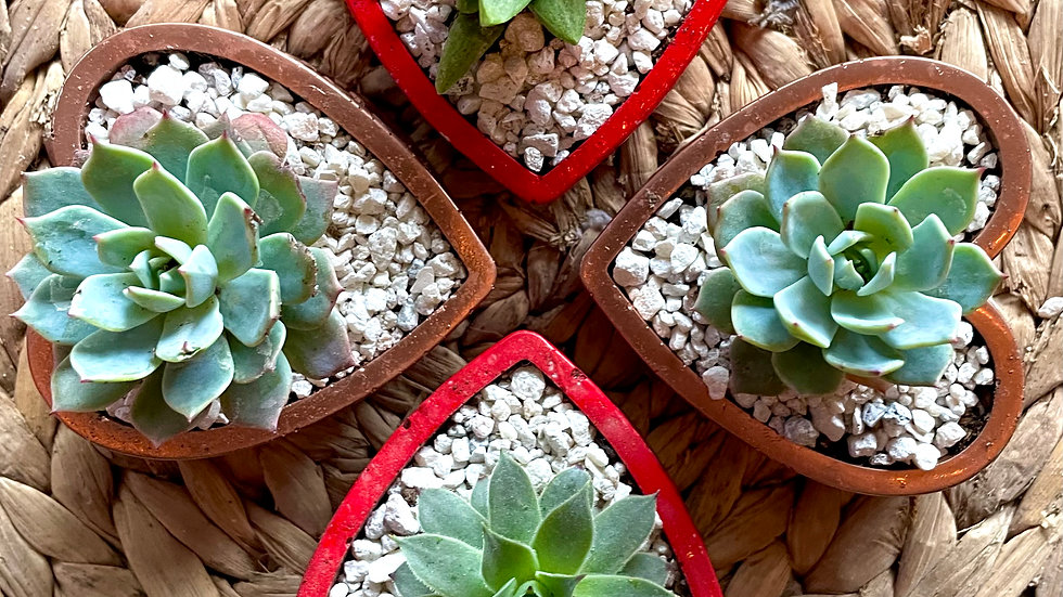 Small Beveled Heart Planter