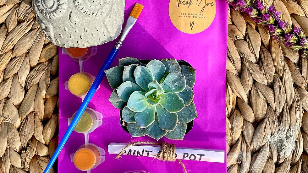 Owl Paint and Pot Kit