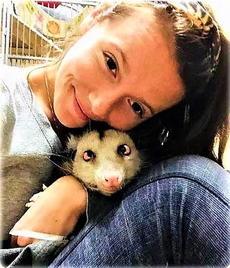 A passion for opposum, and the Little Sanctuary that can