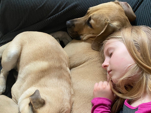 Gone to the dogs: 8-year-old Pasadena girl is all-in for down-and-out pets