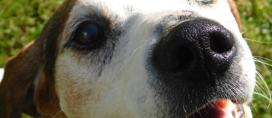 Help a special hound for the holiday!
