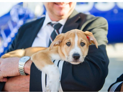 """Ruh-roh!"" Southwest Airlines to boot emotional support animals at BWI starting in March"