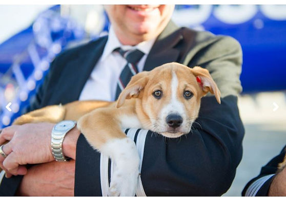 """""""Ruh-roh!"""" Southwest Airlines to boot emotional support animals at BWI starting in March"""