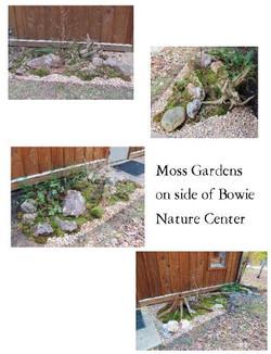 mossweb.jpg