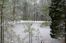 winter.2.jpg