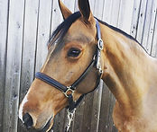 This perfect little mare NicNac (5yo Cla